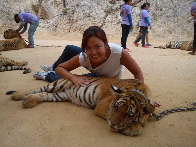 tigres trotamundostatisato
