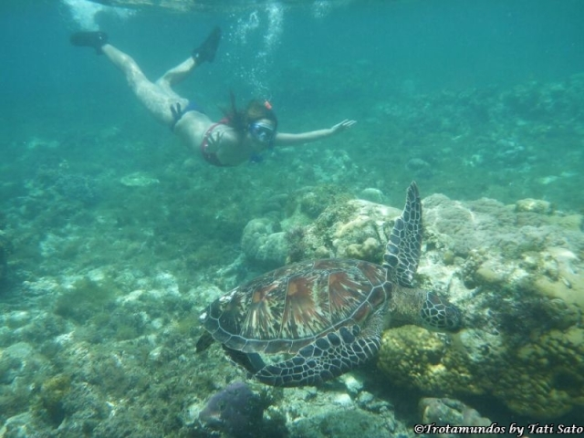 tartaruga marinha_apo island_trotamundosbytatisato