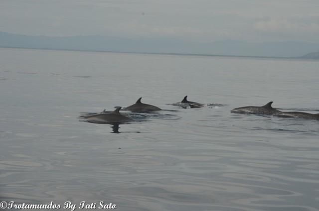 golfinhos_bais_filipinas_trotamundosbytatisato